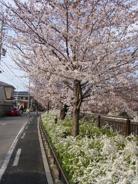 Sakurayamazaki2dpz