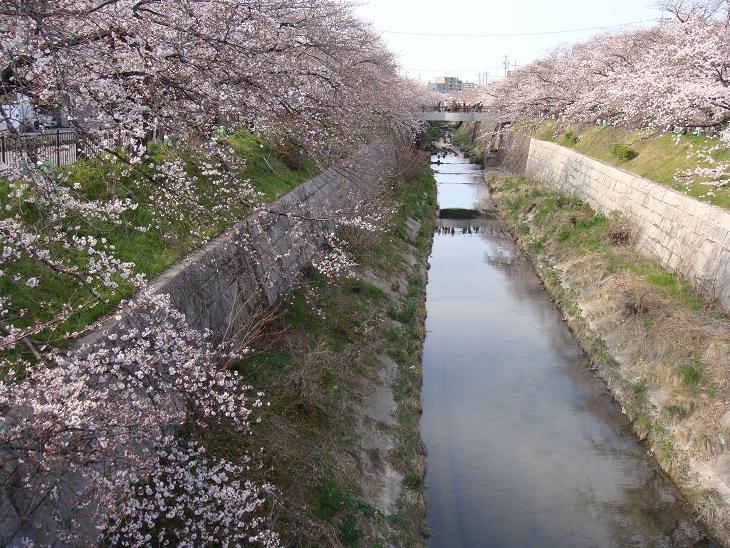 Sakurayamazaki4