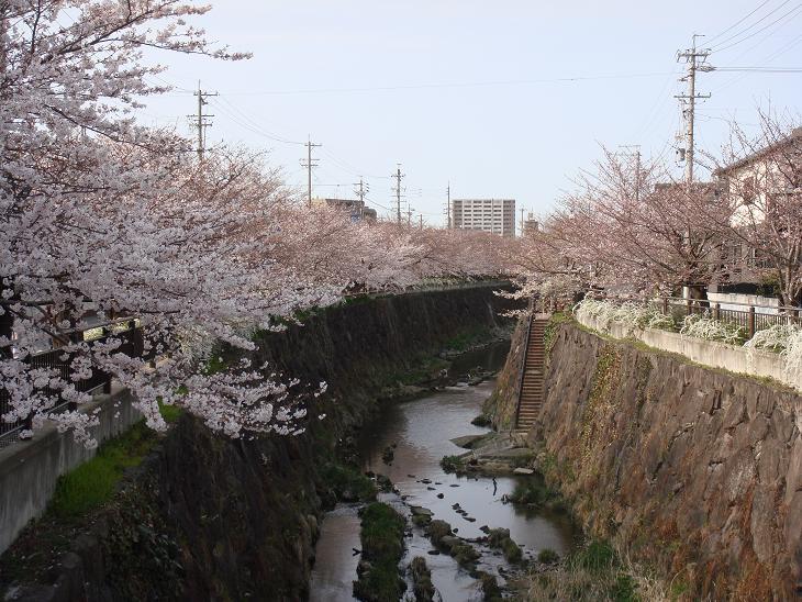 Sakurayamazaki5